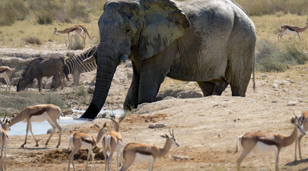 Un parc en Afrique